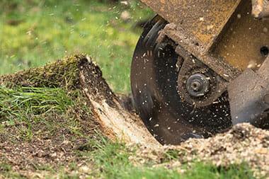 stump-ginding-service