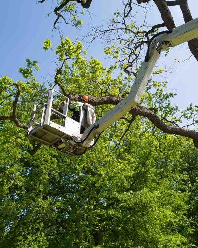 tree-pruning-4